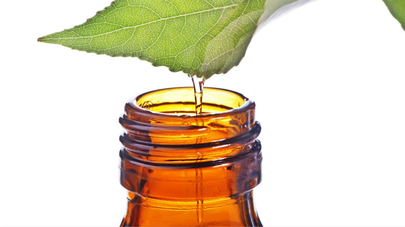 5 functional ingredients that bring a wealth of health benefits-Botanical extracts